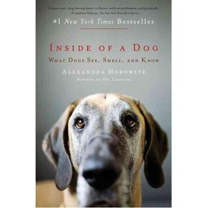 341-632518-0-5-inside-of-a-dog-what-dogs-see-smell-and-know